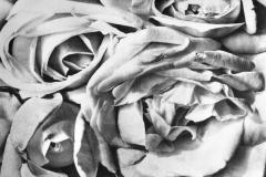 Tina Modotti, Rose, 1924